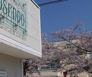 仏壇ギャラリーと桜